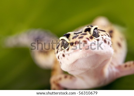 Gecko reptile on green leaf and glass globe - stock photo