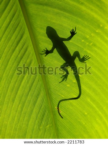 Gecko silhouette on backlight leaf - stock photo