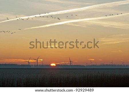 Geese flying at sunrise in winter - stock photo