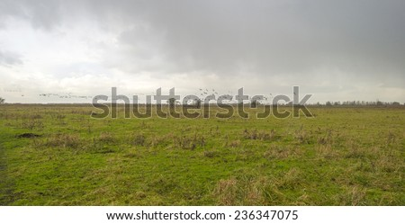 Geese flying into deteriorating weather at fall - stock photo
