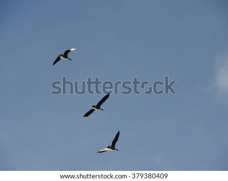 Geese in Flight - stock photo