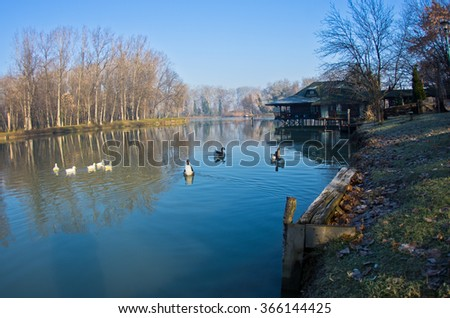 Geese on a small lake at sunny morning, near Belgrade, Serbia