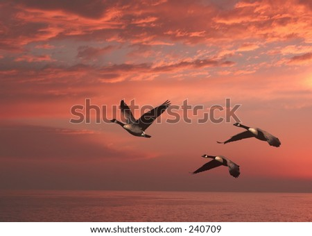 geese over the water sunset time