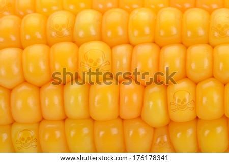 Gene manipulated corn with skulls - stock photo