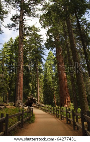 General Grant Grove in Kings Canyon National Park, California.