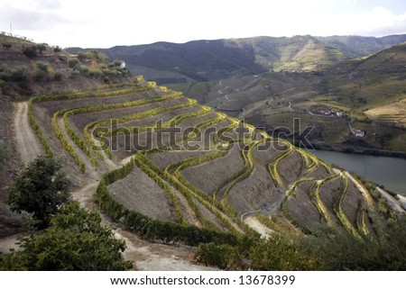 General view of the famous vineyards of Porto wine. - stock photo