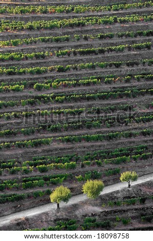 General view of the world famous vineyards of Porto wine.Early morning light. - stock photo