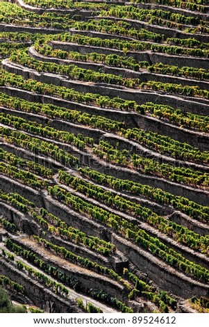 General view of the world famous vineyards of Porto wine.More in my gallery. - stock photo