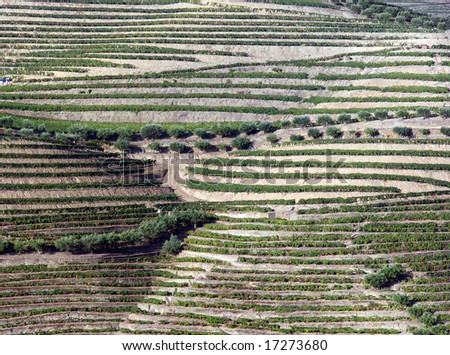 General view of the world famous vineyards of Porto wine. Square frame. - stock photo