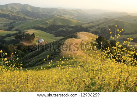 Generic rural landscape in summer with blooming rapeseed - stock photo