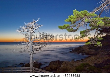 Genesis (Two cypress tree reaching out for each other) - stock photo