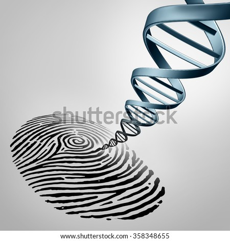 Genetic fingerprinting as a fingerprint with DNA emerging out as a medical identification symbol for a paternity test or biotechnology genome icon. - stock photo