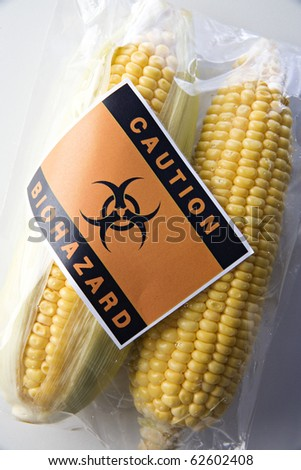 Genetically modified corn food concept with bio-hazard sign - stock photo