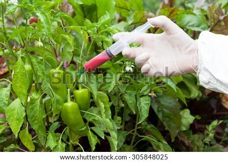 Genetically modified food. Genetic engineering. - stock photo
