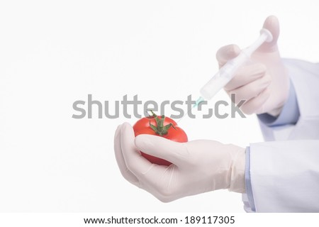 Genetically modified foods. Genetic modification of a tomato - stock photo