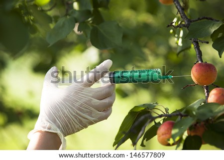 Genetically modified fruit - stock photo
