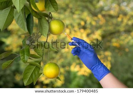 Genetically modified fruit - stock photo