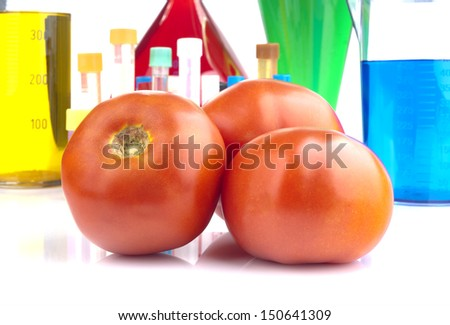 Genetically modified organism - ripe tomatoes and laboratory glassware on white background  - stock photo