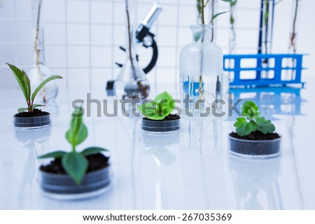 Genetically modified plant tested in petri dish .Ecology laboratory - stock photo