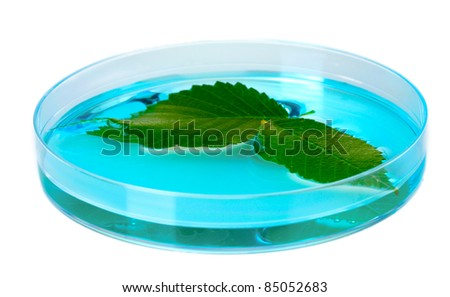 Genetically modified plant tested in petri dish isolated on white - stock photo