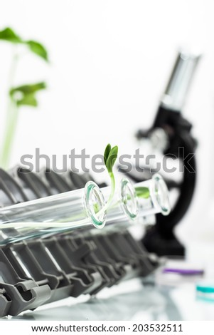 Genetically modified plant tested in test tube .Ecology laboratory.  - stock photo