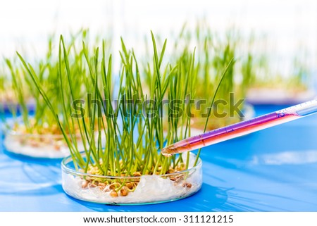 Genetically modified plants in a scientific laboratory - stock photo