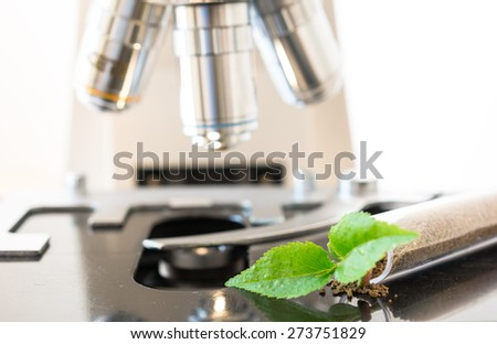 Genetically modified seedling, growing in a laboratory tube, on microscope. Concept for biotechnology - stock photo