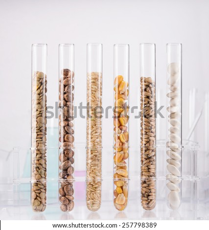 Genetically modified seeds. Test tubes filled with seeds - stock photo