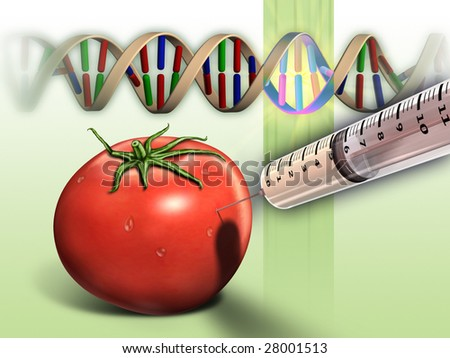 Genetically modified tomato and dna sequence. Digital illustration. - stock photo