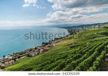 Geneva lake with vineyards early summer. - stock photo