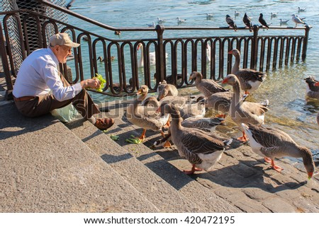 GENEVA, SWITZERLAND - SEPTEMBER 07:Old man feeding geese on the lake promenade Geneva (Lac Leman). September 07, 2012