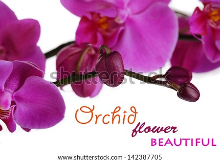 Gentle beautiful orchid isolated on white - stock photo