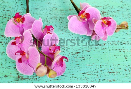 Gentle beautiful orchid on wooden table close-up - stock photo