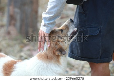 Gentle dog - stock photo