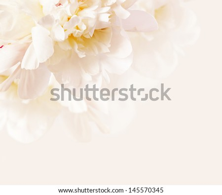 gentle peony background, very closeup in high key