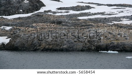 Gentoo penguin rookery; nesting penguins with glacier icefall in background,[Pygoscelis papua],Port Lockerby,Antarctica - stock photo