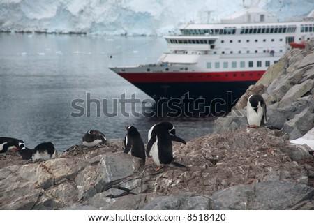 Gentoo penguin rookery with cruise ship anchored in the bay,[Pygoscelis papua]Neko Harbor, Andvord Bay,Antarctica - stock photo