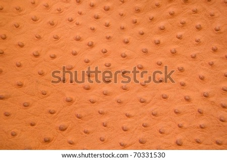 genuine leather textured of ostrich skin