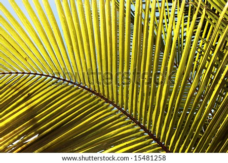 geometric background of yellow palm tree leaves, closeup
