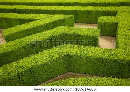geometric pattern of green hedge flowerbed - stock photo