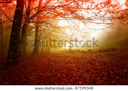 Gerês N. P. Portugal in beautiful Autumn colors - stock photo