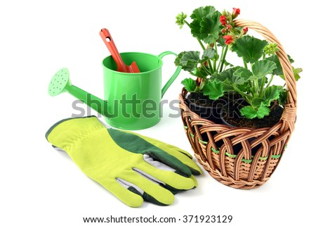 Geranium flowerpot in a basket with gardening tools like gloves, shovel, water can. isolated  background