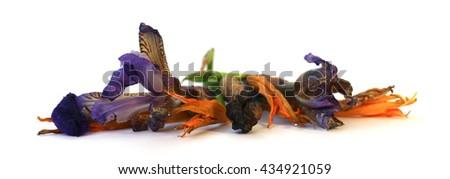 geranium, petunia, dry volume volume delicate flowers, leaves and petals of pressed, iris, rose, marigolds, Aquilegia pelargonium, isolated on white background scrapbook - stock photo