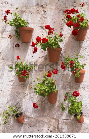 geranium red flowers in pot on brick wall typical of Spain - stock photo