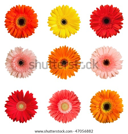 Gerber collection isolated on white background