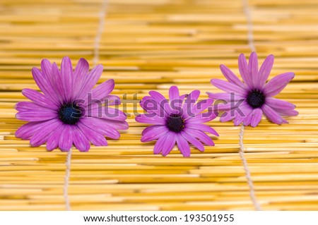 Gerber flowers, daisies and bamboo mat