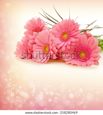 Gerber flowers isolated on pink background. - stock photo