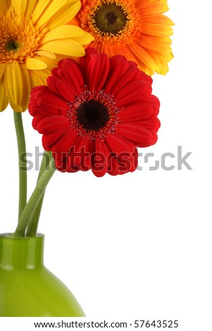 Gerbera daisies in vase - stock photo