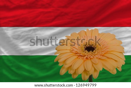 gerbera daisy flower and national flag of hungary as concept and symbol of love, beauty, innocence, and positive emotions - stock photo