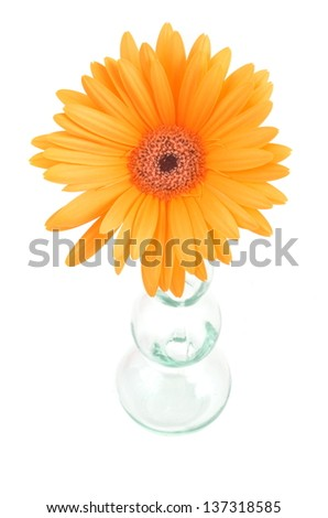 Gerbera Daisy flower in a glass vase - stock photo